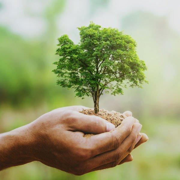 sustainability-longevity-Henninger